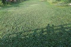 Ichamati-River-Cleaning-Pabna-Bangladesh-October-2020-16
