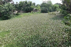 Ichamati-River-Cleaning-Pabna-Bangladesh-October-2020-18