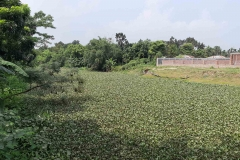 Ichamati-River-Cleaning-Pabna-Bangladesh-October-2020-22