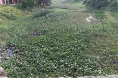 Ichamati-River-Cleaning-Pabna-Bangladesh-October-2020-23