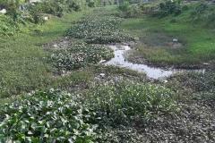 Ichamati-River-Cleaning-Pabna-Bangladesh-October-2020-26