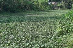 Ichamati-River-Cleaning-Pabna-Bangladesh-October-2020-27