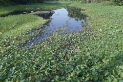 Ichamati-River-Cleaning-Pabna-Bangladesh-October-2020-28