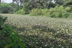 Ichamati-River-Cleaning-Pabna-Bangladesh-October-2020-3