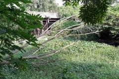 Ichamati-River-Cleaning-Pabna-Bangladesh-October-2020-32