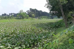 Ichamati-River-Cleaning-Pabna-Bangladesh-October-2020-35