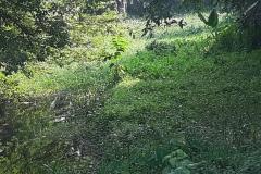 Ichamati-River-Cleaning-Pabna-Bangladesh-October-2020-36