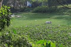 Ichamati-River-Cleaning-Pabna-Bangladesh-October-2020-37