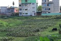 Ichamati-River-Cleaning-Pabna-Bangladesh-October-2020-38