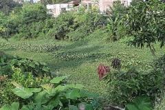 Ichamati-River-Cleaning-Pabna-Bangladesh-October-2020-4
