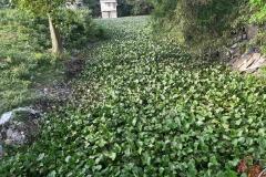 Ichamati-River-Cleaning-Pabna-Bangladesh-October-2020-5