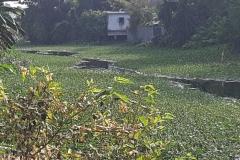 Ichamati-River-Cleaning-Pabna-Bangladesh-October-2020-6