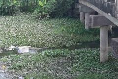 Ichamati-River-Cleaning-Pabna-Bangladesh-October-2020-7