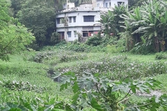 Ichamati-River-Pabna-Bangladesh-Septemter2020-1