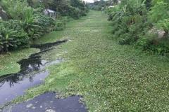 Ichamati-River-Pabna-Bangladesh-Septemter2020-10