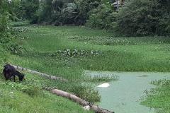 Ichamati-River-Pabna-Bangladesh-Septemter2020-12
