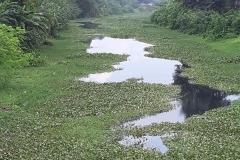 Ichamati-River-Pabna-Bangladesh-Septemter2020-13