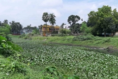 Ichamati-River-Pabna-Bangladesh-Septemter2020-14