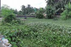 Ichamati-River-Pabna-Bangladesh-Septemter2020-15