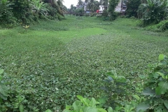 Ichamati-River-Pabna-Bangladesh-Septemter2020-16
