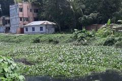 Ichamati-River-Pabna-Bangladesh-Septemter2020-20