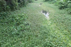 Ichamati-River-Pabna-Bangladesh-Septemter2020-24