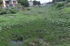 Ichamati-River-Pabna-Bangladesh-Septemter2020-25