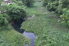 Ichamati-River-Pabna-Bangladesh-Septemter2020-29