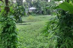 Ichamati-River-Pabna-Bangladesh-Septemter2020-32