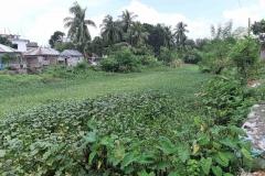 Ichamati-River-Pabna-Bangladesh-Septemter2020-33