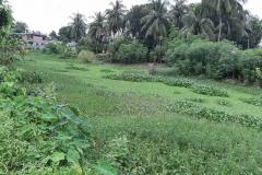 Ichamati-River-Pabna-Bangladesh-Septemter2020-6
