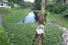 Ichamati-River-Pabna-Bangladesh-Septemter2020-7