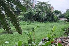 Ichamati-River-Pabna-Bangladesh-Septemter2020-8