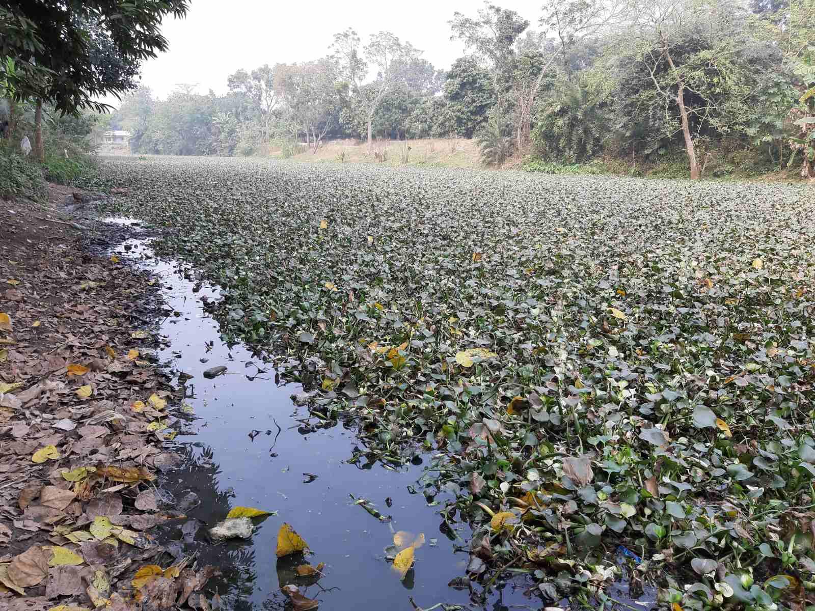 Ichamati-River-Pabna-Bangladesh-as-of-January-2021-3.jpg