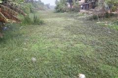 Ichamati-River-Pabna-Bangladesh-as-of-January-2021-11