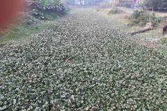 Ichamati-River-Pabna-Bangladesh-as-of-January-2021-17