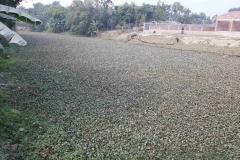 Ichamati-River-Pabna-Bangladesh-as-of-January-2021-18
