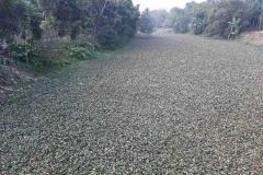Ichamati-River-Pabna-Bangladesh-as-of-January-2021-21