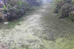 Ichamati-River-Pabna-Bangladesh-as-of-January-2021-24