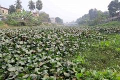 Ichamati-River-Pabna-Bangladesh-as-of-January-2021-25