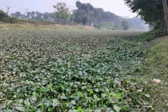 Ichamati-River-Pabna-Bangladesh-as-of-January-2021-34