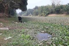 Ichamati-River-Pabna-Bangladesh-as-of-January-2021-6