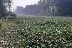 Ichamati-River-Pabna-Bangladesh-December-2020-1