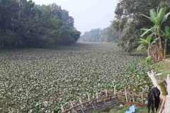 Ichamati-River-Pabna-Bangladesh-December-2020-17