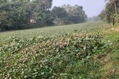 Ichamati-River-Pabna-Bangladesh-December-2020-24