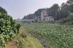 Ichamati-River-Pabna-Bangladesh-December-2020-5